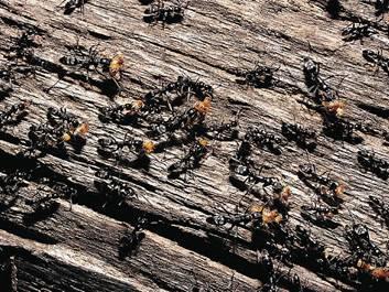 Значение насекомых в жизни человека